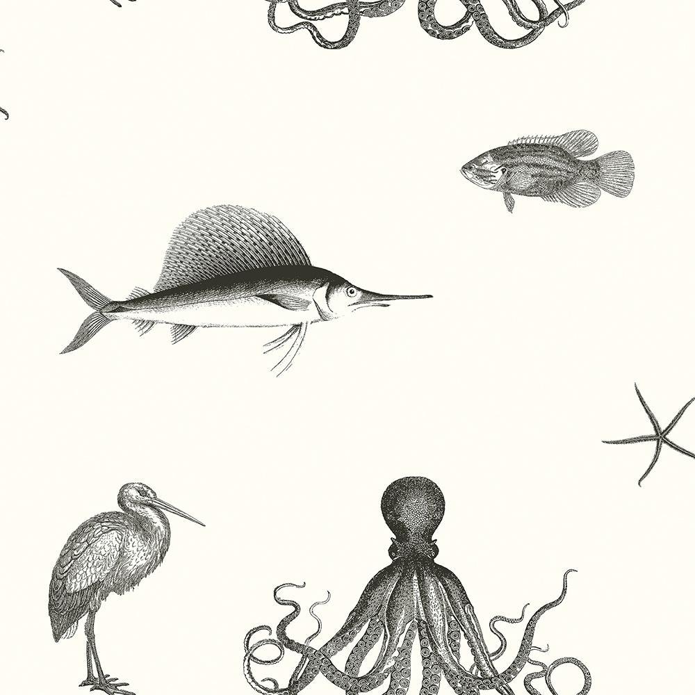 Chesapeake Oceania Black Sea Creature Wallpaper Sample