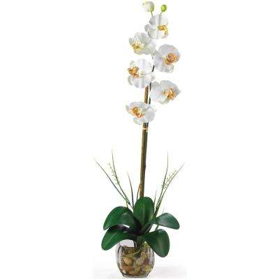 27 in. Single Phalaenopsis Liquid Illusion Silk Flower Arrangement in Cream