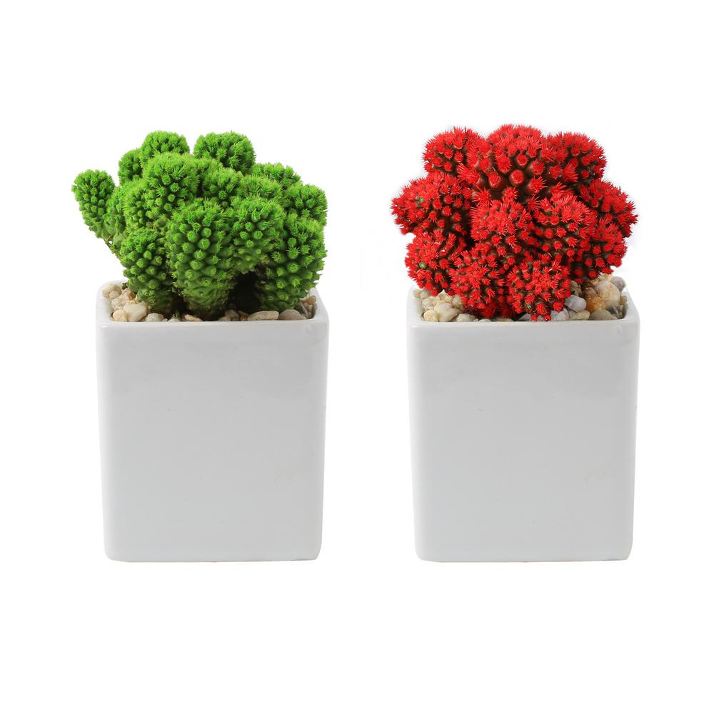 COSTAFARMS Costa Farms Holiday Live Desert Gems Cacti in 2.5 in. Gloss Ceramic Grower's Choice in Red or Green (2-Pack)