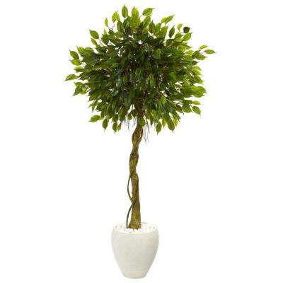 5.5 ft. High Indoor/Outdoor Ficus Artificial Tree in White Oval Planter