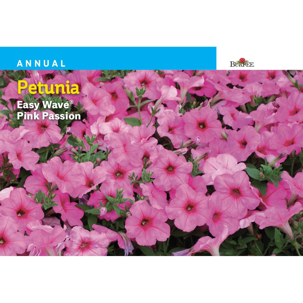 Burpee Petunia Easy Wave Pink Passion Seed 43072 The Home Depot