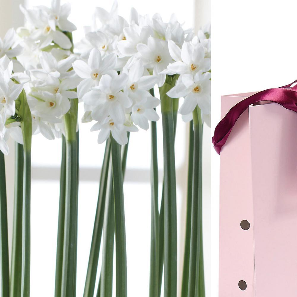 Paperwhite Bulb in Rose Gift Bag (6-Bulbs)
