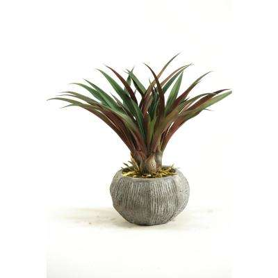Indoor Red and Green Lily Grass in Concrete Bowl