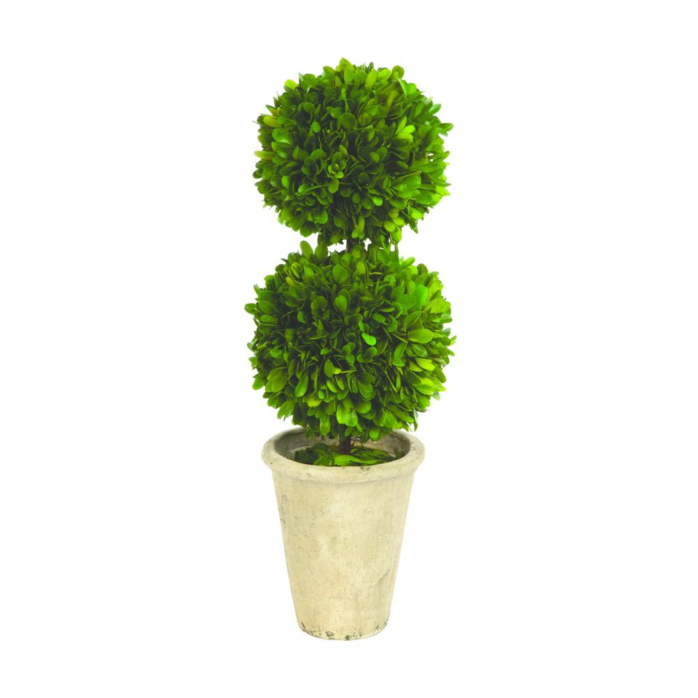 Boxwood Collection 17 In Preserved Double Ball Topiary