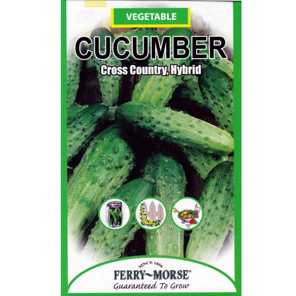 Ferry-Morse Cucumber Cross-Country Hybrid Seed
