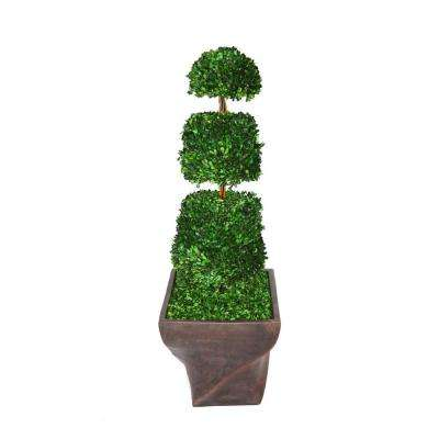 54 in. Tall Preserved Natural Spiral Boxwood Cone Topiary in 17 in. Fiberstone Planter