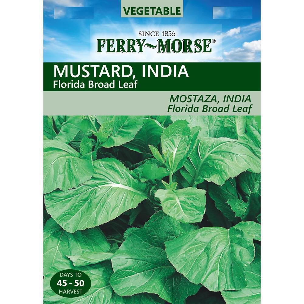 Mustard India Florida Broad Leaf Seed