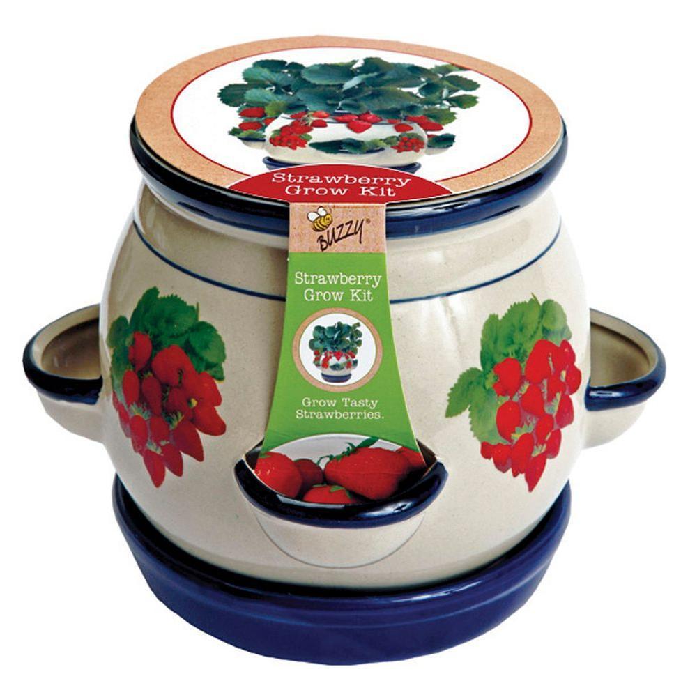 Buzzy Strawberry Grow Kit