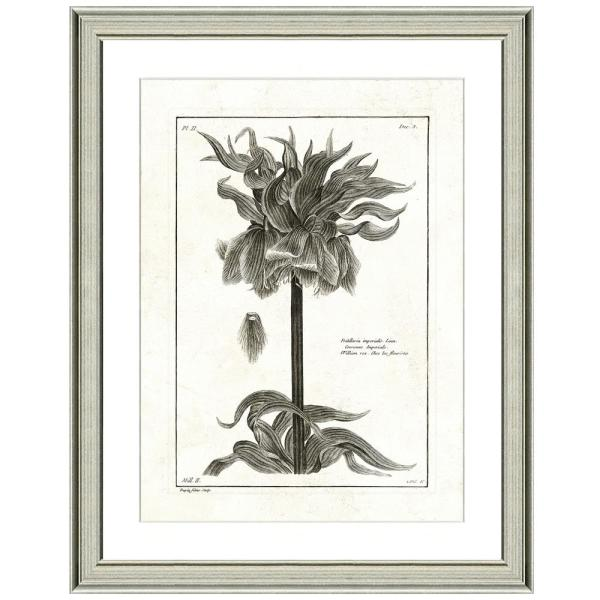 ''Crown imperial lithograph'' Framed Archival Paper Wall Art (26 in. x 32 in. in full size)