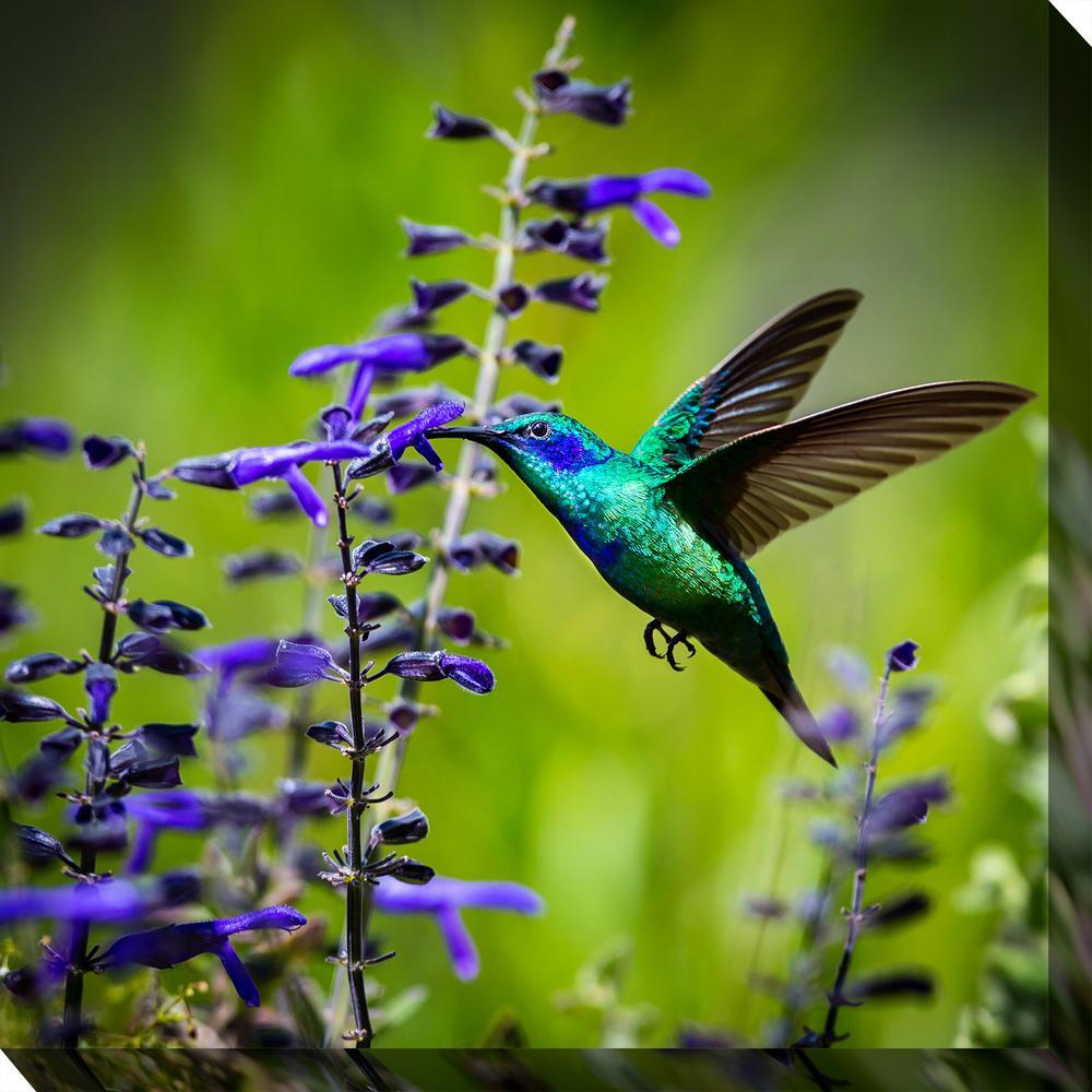 Hummingbird 7 Outdoor Canvas Art