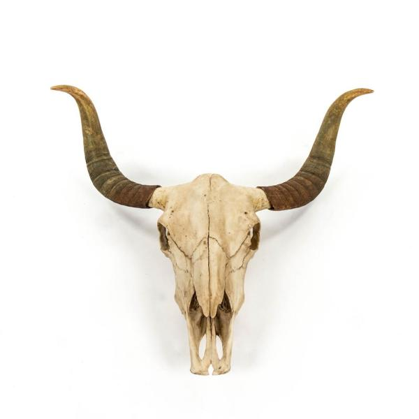 Resin Bull Skull Wall Decor