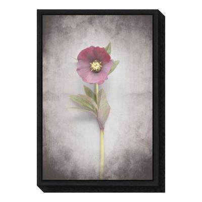 """Vintage Hellebore Study VI"" by Felicity Bradley Framed Canvas Wall Art"
