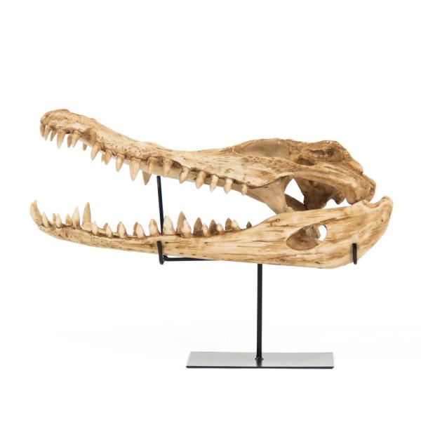 Polyresin Cast Alligator Skull w/Base