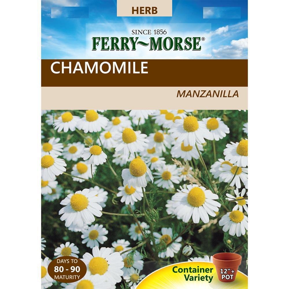 The smart Trick of When To Start Chamomile Seeds That Nobody is Talking About