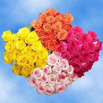 Fresh Assorted Roses - 4 Colors (100 Stems)