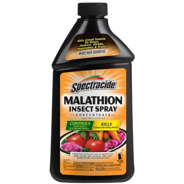 Malathion 32 fl oz Insect Spray Concentrate for Gardens