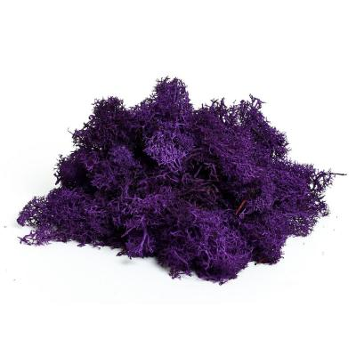 Shop Succulents Reindeer Moss, Purple