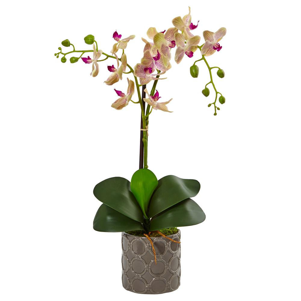 Nearly Natural Indoor Double Phalaenopsis Silk Orchid in Gray Ceramic Planter This artificial Phalaenopsis orchid adds a perfect touch of serenity to whatever room you place it in with a grace and composition reminiscent of Japanese flower arrangements. It is strong enough to be the focal point of a room all by itself on a small plant stand. This elegant arrangement comes complete in a gray ceramic planter with natural moss included.