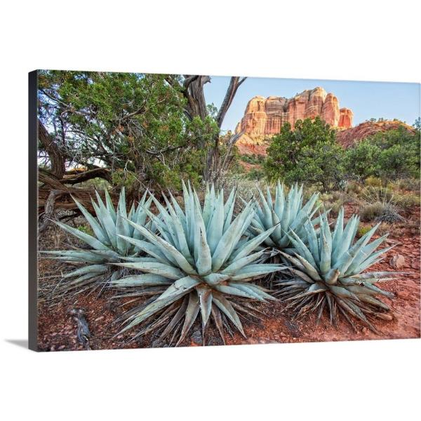 Greatbigcanvas Agave Plants And Cathedral Rock Sedona Az By