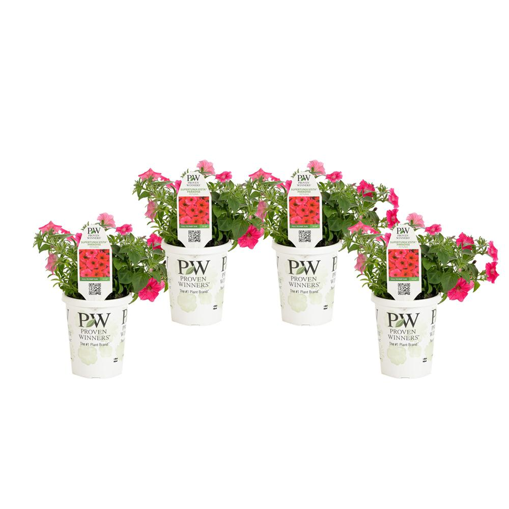 Flowers Patio, Lawn & Garden Proven Winners SUPPRW4047524
