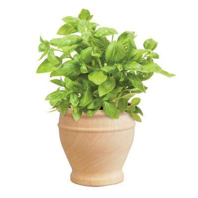 Herb Seed Kits in Marble Clay Planters (3-Count)