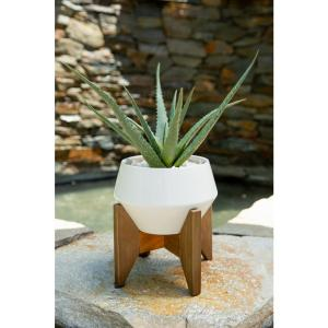 20 in. Artificial Aloe in 8.5 in. GEO Ceramic Pot on Wood Stand