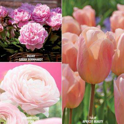 Color Your Garden Pink Bulbs Collection (Set of 40)