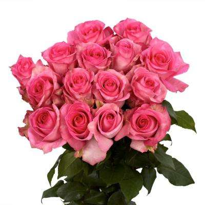 Fresh Pink Roses (50 Stems)
