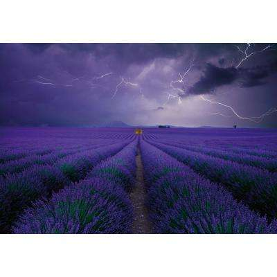 Field Of Lavender Wall Mural