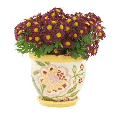 12.25 in. Lemon Drop Colorful Ceramic Planter with Saucer