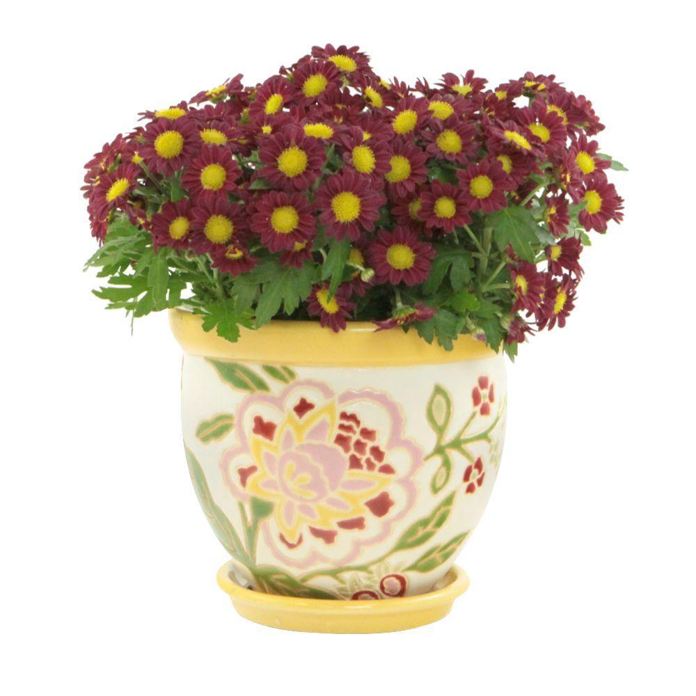 Pennington 1225 In Lemon Drop Rainbow Ceramic Floral Planter