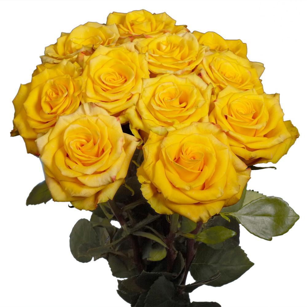 Globalrose Fresh Yellow Roses 50 Stems Roses Yellow 50 The Home