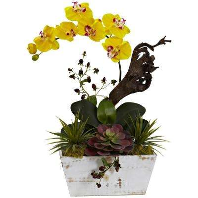 21 in. Orchid and Succulent Garden with White Wash Planter in Yellow