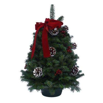 18 in. Balsam Fir Classic Fresh Tabletop Tree Arrangement : Multiple Ship Weeks Available