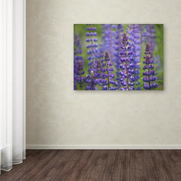 Trademark Fine Art 18 in. x 24 in. ''Blue Lupine Flowers''