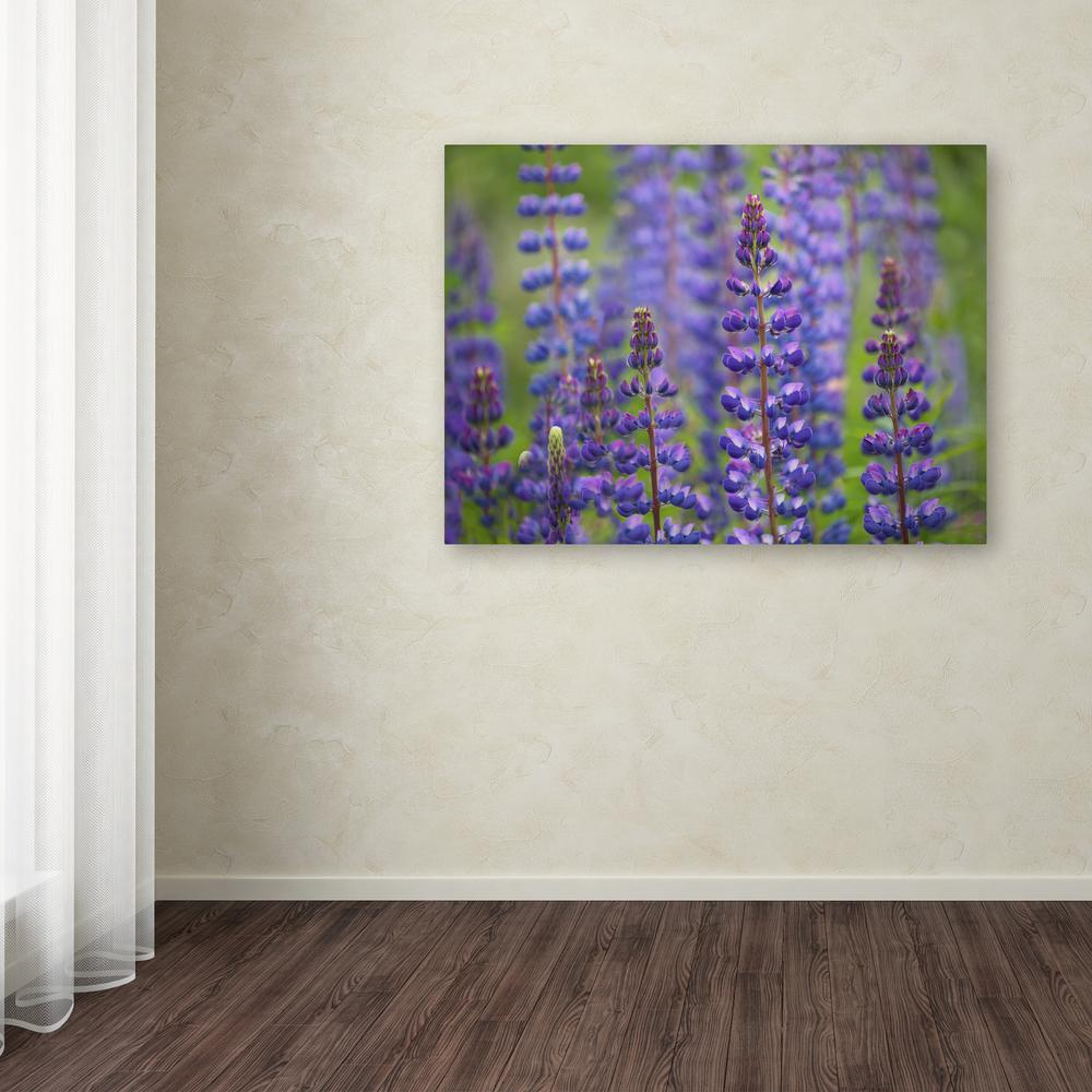 """Trademark 35 in. x 47 in. """"Blue Lupine Flowers"""" by Cora N..."""