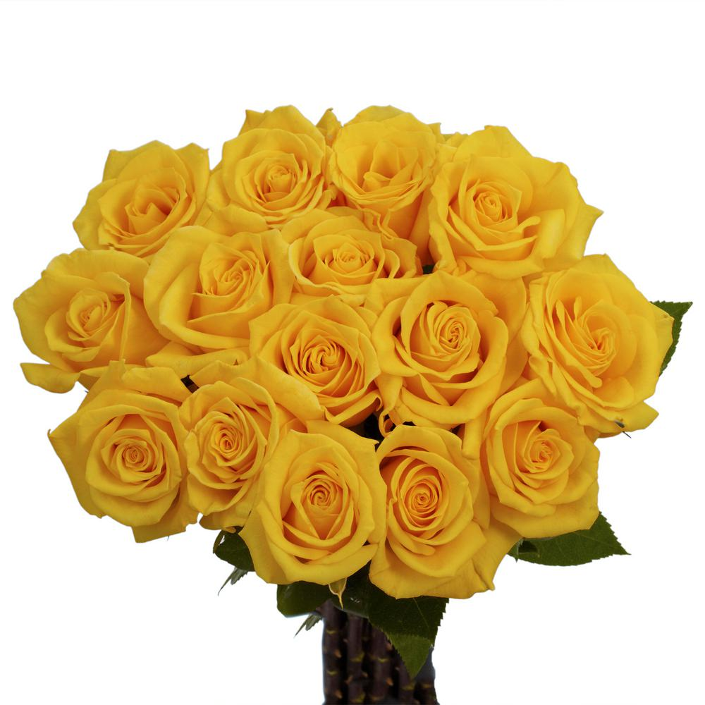 Globalrose Fresh Yellow Color Roses 100 Stems Gold Strike Medium