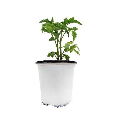 1/2 Gal. White Round Plastic Nursery Garden Pots (50-Pack) (0.62 Actual Gallons / 2.35 Liters)