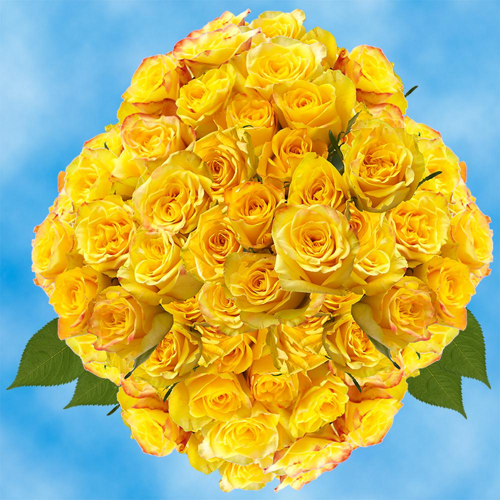 Globalrose Fresh Yellow Roses for Valentine's Day (100 Stems)