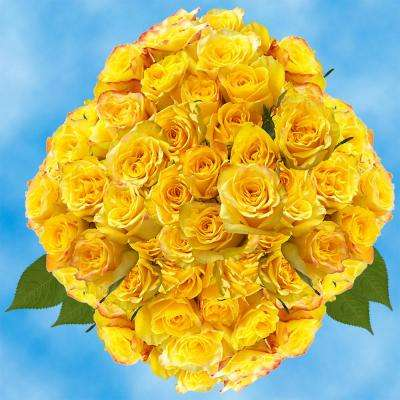 Fresh Yellow Roses for Valentine's Day (100 Stems)