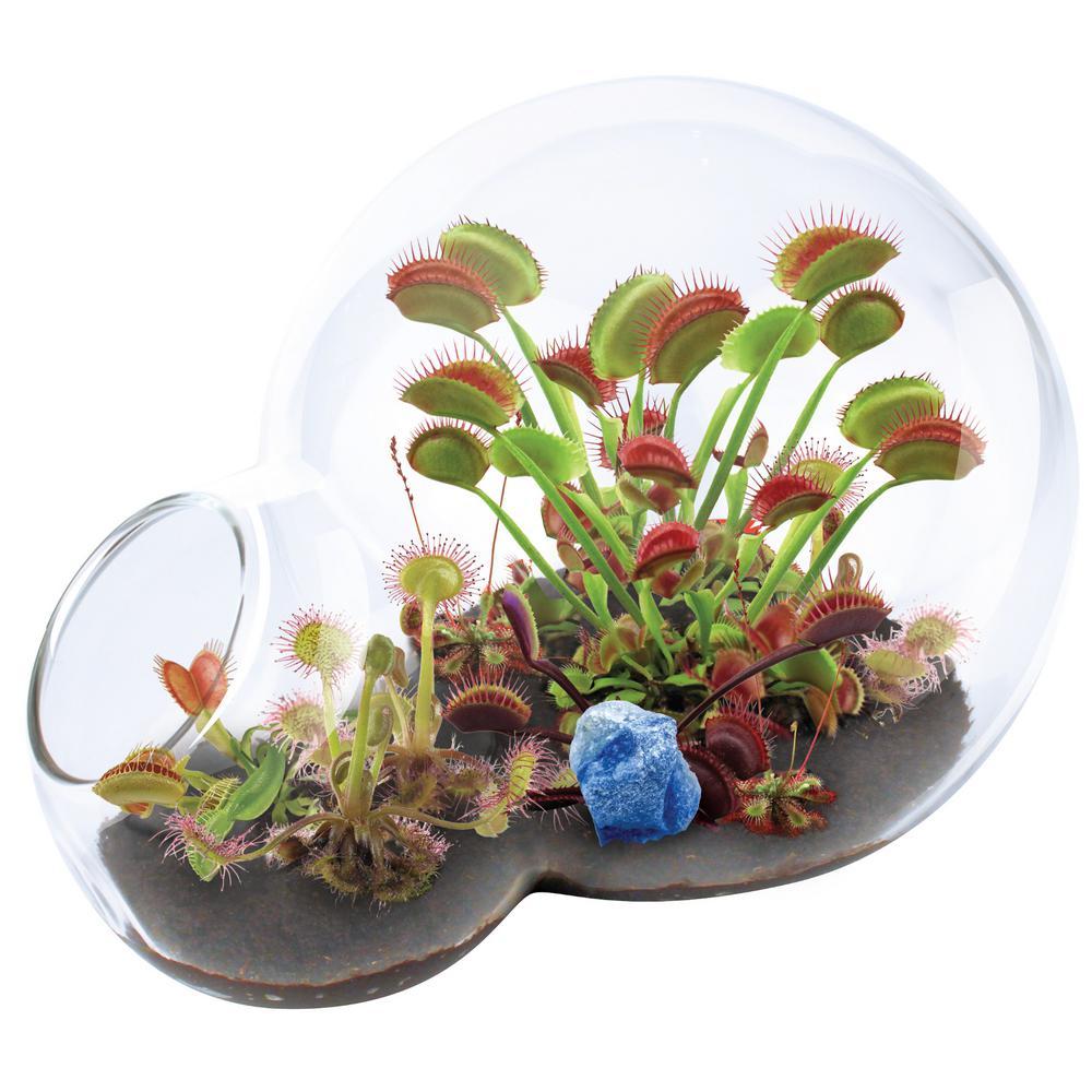 Double Sphere Glass Terrariums Carnivorous Venus Flytrap Growarium Indoor Garden Terrarium Indoor Seed Starter Kit