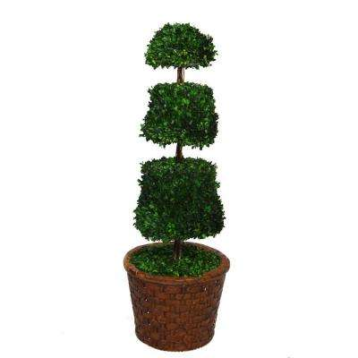 49 in. Tall Preserved Natural Spiral Boxwood Cone Topiary in 17 in. Fiberstone Planter