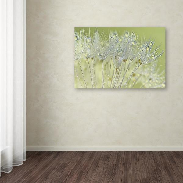 30 in. x 47 in. ''Dandelion Dew I'' by Cora Niele Printed Canvas Wall Art
