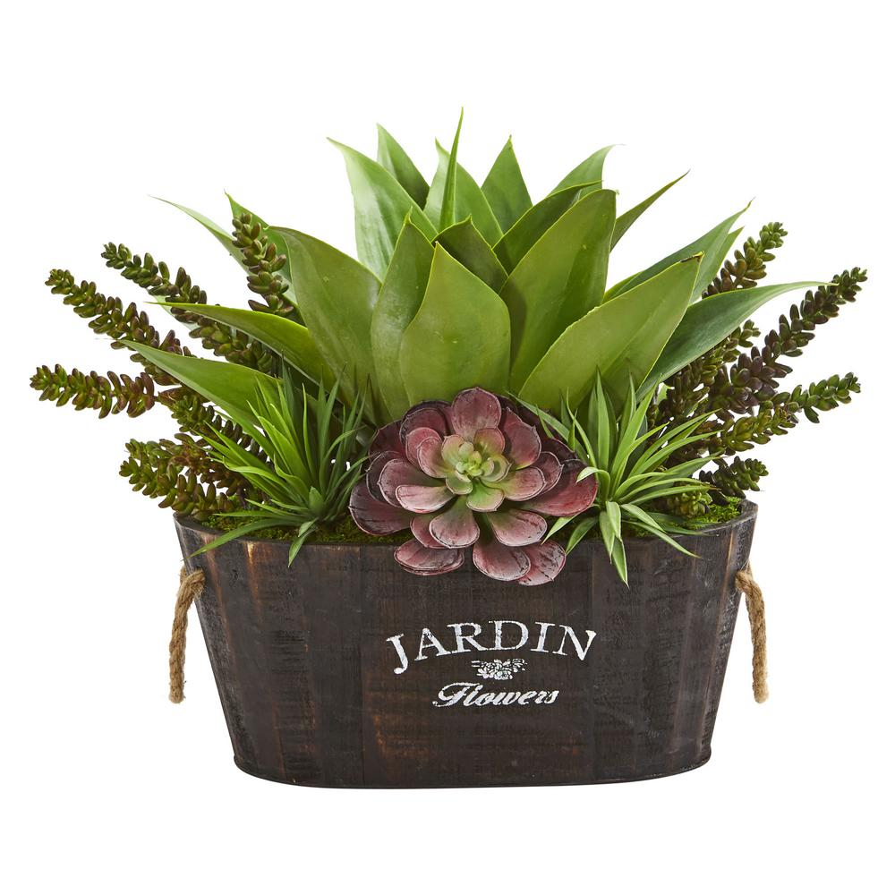 Indoor Succulent Garden in Wood Planter