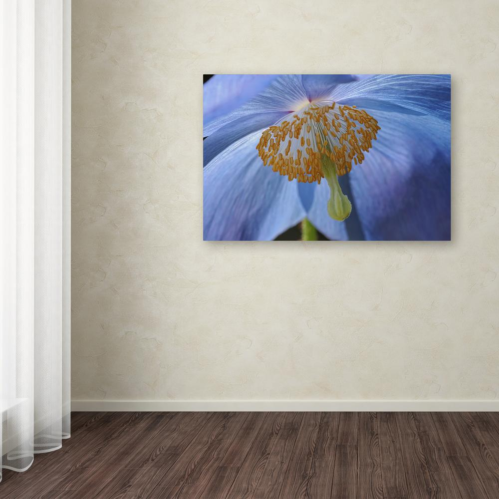 "12 in. x 19 in. ""Blue Poppy"" by Cora Niele Printed"