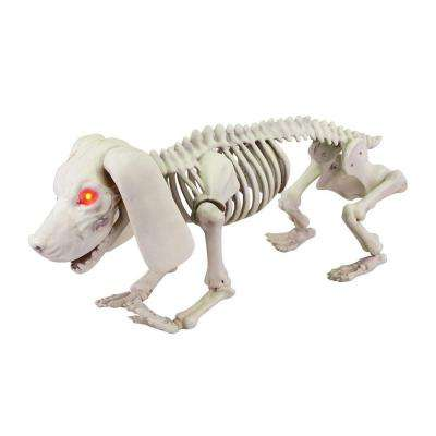 8.46 in. Animated Skeleton Dachshund with LED Illuminated Eyes