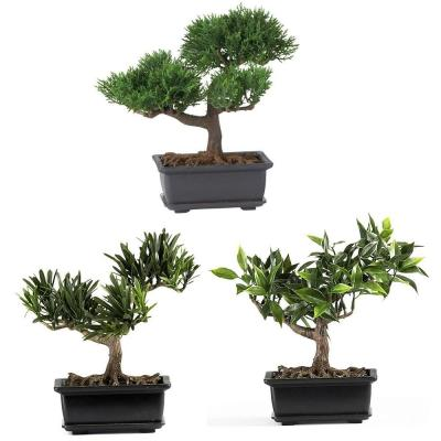 8-1/2 in. Bonsai Silk Plant Collection (Set of 3)