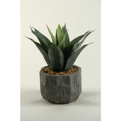 Indoor Red and Green Agave Plant in Ceramic Planter