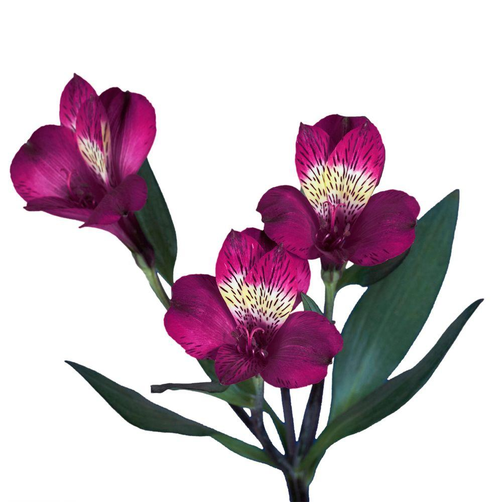 Lily flower bouquets garden plants flowers the home depot fresh lavender alstroemeria flowers 100 stems 400 blooms izmirmasajfo
