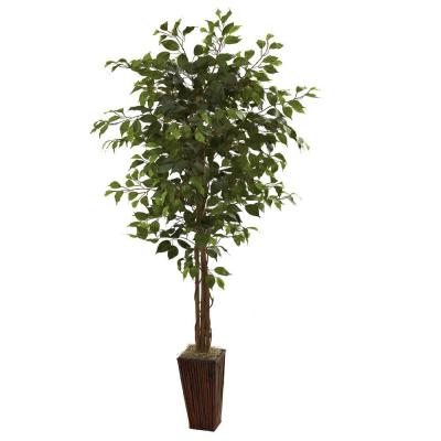 6 ft. Ficus Tree with Bamboo Planter